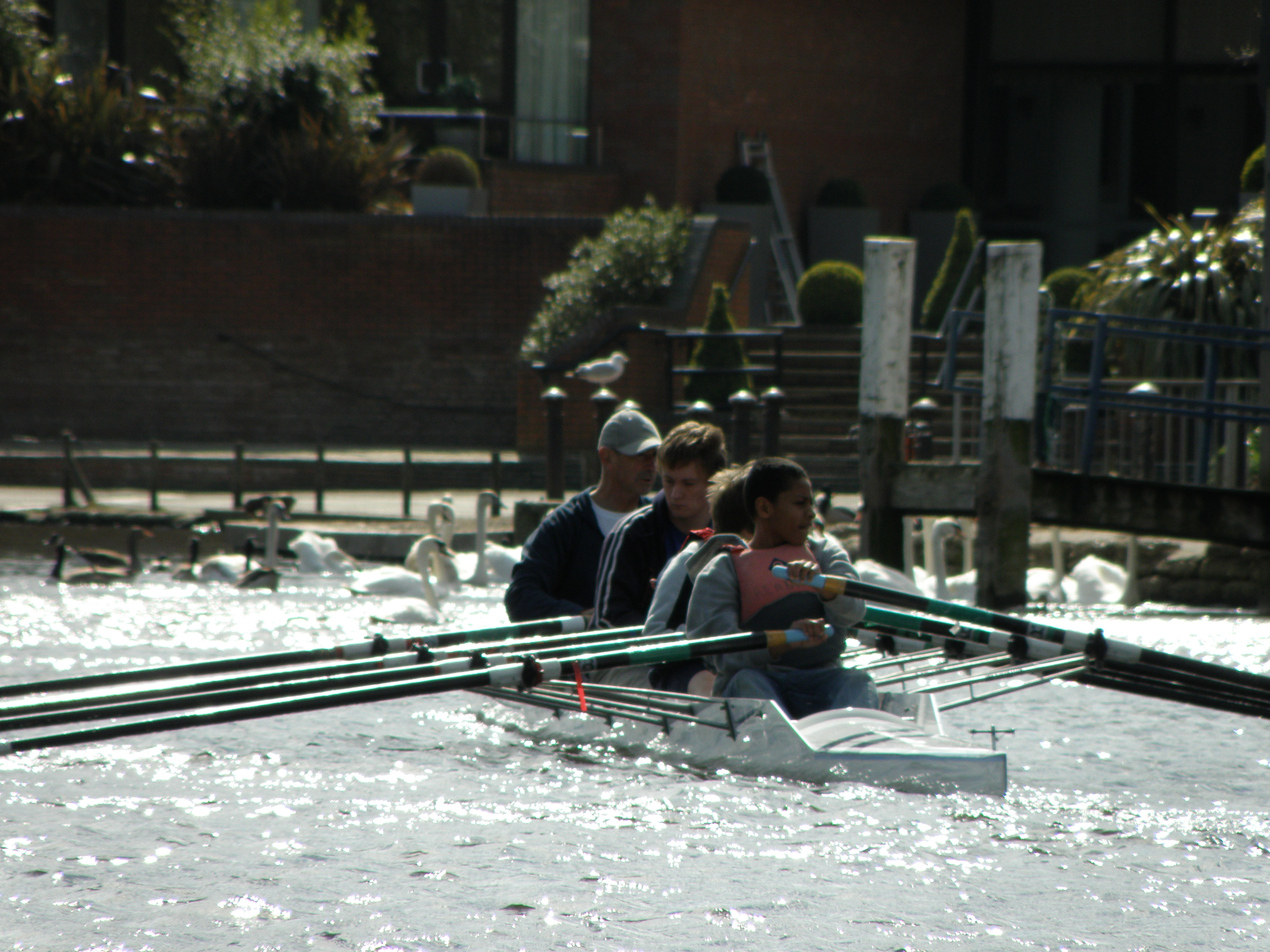 Rowing in a Four